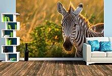 Premium Foto-Tapete Beim Barte des Zebras