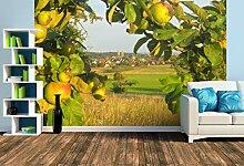 Premium Foto-Tapete Blick auf Bad Homburg-Kirdorf