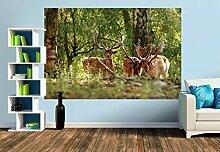 Premium Foto-Tapete Damhirsche (verschiedene