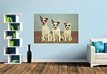 Premium Foto-Tapete Drei Terrierhippies