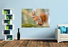 Premium Foto-Tapete Eichhörnchen mit Haselnuss im