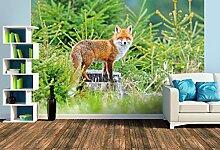Premium Foto-Tapete Ein aufmerksamer Roter Fuchs
