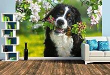 Premium Foto-Tapete Ein Motiv aus dem Kalender