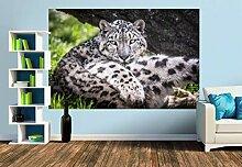 Premium Foto-Tapete Ein Schneeleopard