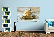 Premium Foto-Tapete Erdkröte (verschiedene
