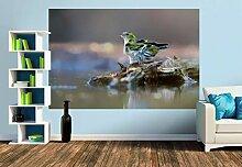 Premium Foto-Tapete Erlenzeisig (verschiedene