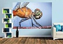 Premium Foto-Tapete Insekt, Augen-Nahaufnahme