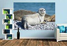 Premium Foto-Tapete Junger Seehund (versch.
