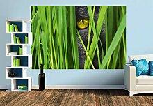 Premium Foto-Tapete Katzenaugen (verschiedene
