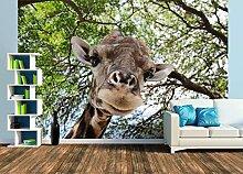 Premium Foto-Tapete Kenia, Giraffe von unten