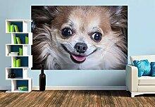 Premium Foto-Tapete Lachender Chihuahua