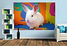 Premium Foto-Tapete Lustiges Kaninchen