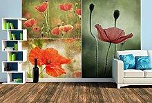 Premium Foto-Tapete Mohn (verschiedene Größen)