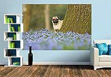 Premium Foto-Tapete Mops mit Frühlingsblümchen