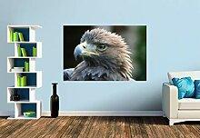 Premium Foto-Tapete Steinadler (verschiedene