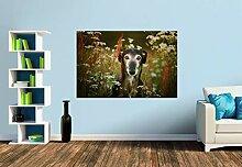 Premium Foto-Tapete Windhund Sima (verschiedene