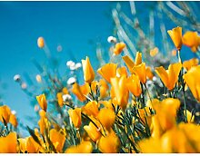 Premium Fototapete Tulpen 308 x 220 cm - 7 Bahnen-