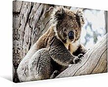 Premium Textil-Leinwand 45 cm x 30 cm quer, Koala