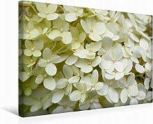 Premium Textil-Leinwand 45 cm x 30 cm quer Weiße Hortensie