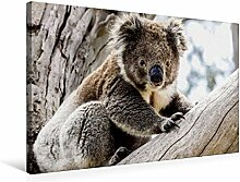 Premium Textil-Leinwand 75 cm x 50 cm quer, Koala