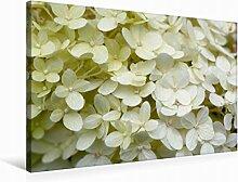 Premium Textil-Leinwand 75 cm x 50 cm quer Weiße Hortensie