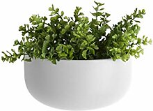 Present Time - Wand-Blumentopf Oval breit -