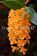 prime vista 100 Stück einzigartige Orchidee