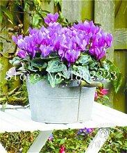 prime vista 100 Stücke Cyclamen Blume bonsai,
