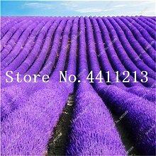 prime vista 100 stücke Lavendel bonsai kraut