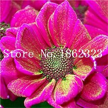 prime vista 100 teile/beutel mischfarbe Bonsai