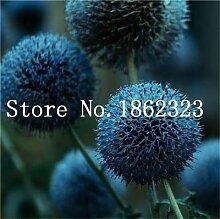 prime vista 200 stücke Riesige Allium