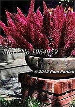 prime vista Bonsai 100 Stücke Garten