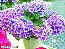 prime vista Bonsai 50 Stücke Mehrere Farben