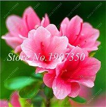 prime vista Bonsai Blumen 100 StüCke Bonsai