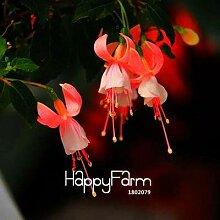 prime vista Große Lila Rote Glocke Blumen