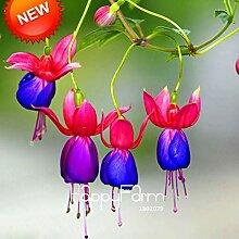 prime vista Große purpurrote rote Glockenblumen