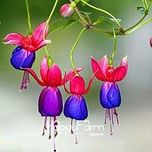 prime vista Weiße Fuchsia Bonsai Topf Blume