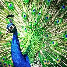 Pro-Art gla1030a Wandbild Glas-Art