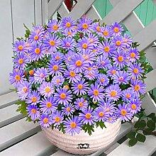 promworld Bunte Blumen,Chrysantheme Topf