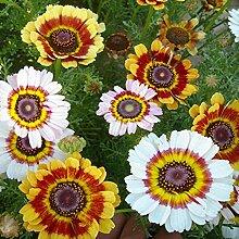 promworld Bunte Blumen,Mischfarbe Kranz