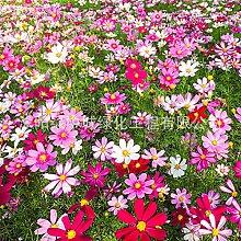 promworld Samen fü Blumen,Blumensamen