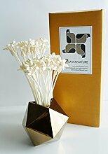 proudnature Set von 40Mini Nacht Jasmin Sola Holz Blume mit Reed Diffusor für Home Duft Aroma Öl.