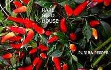 Purira Pepper Samen! Diese Pflanze bekommt Lasten