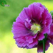 Purple Hollyhock Seeds Blumentopf Pflanzgefäße