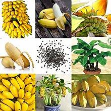 Qenci 10/20/30/50/100 pcs Banane Samen Mini
