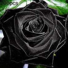 quanjucheer 200 Stück Edle Schwarze Rose