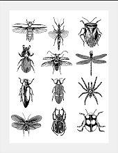 queence Bild Insekten 40x50 cm schwarz Bilder mit