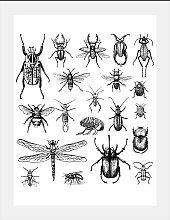 queence Bild Käfer 50x60 cm schwarz Bilder mit