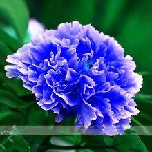 RARE CHINAS Strauchpäonie SEEDS Strauch-Pfingstrose-Blumen-Gartendekoration Pflanze eine Vielzahl von Farben frei 20pcs F01 Blau
