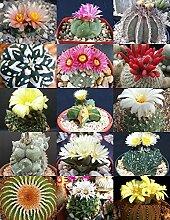 RARE KAKTUS MIX seltene Pflanze exotische Kakteen